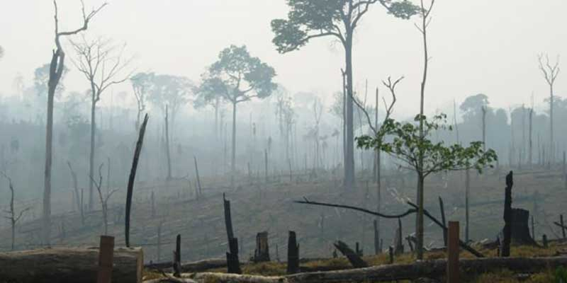 Deforestation for the Production of Commodities Persists in Brazil and in the World