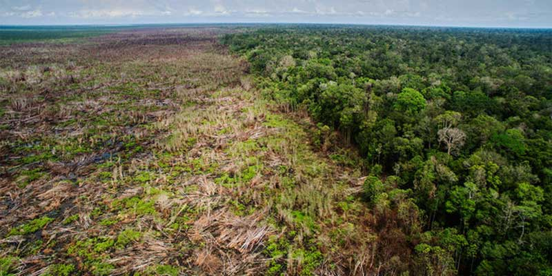 New Global Study Reveals the 'Staggering' Loss of Forests Caused by Industrial Agriculture