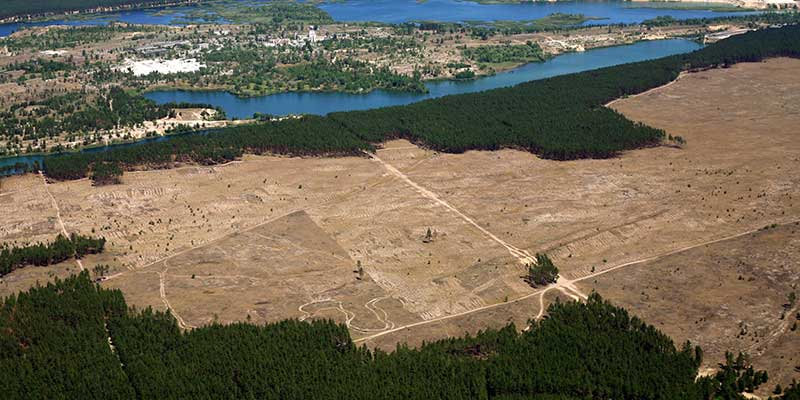 Deforestation: When should I panic?