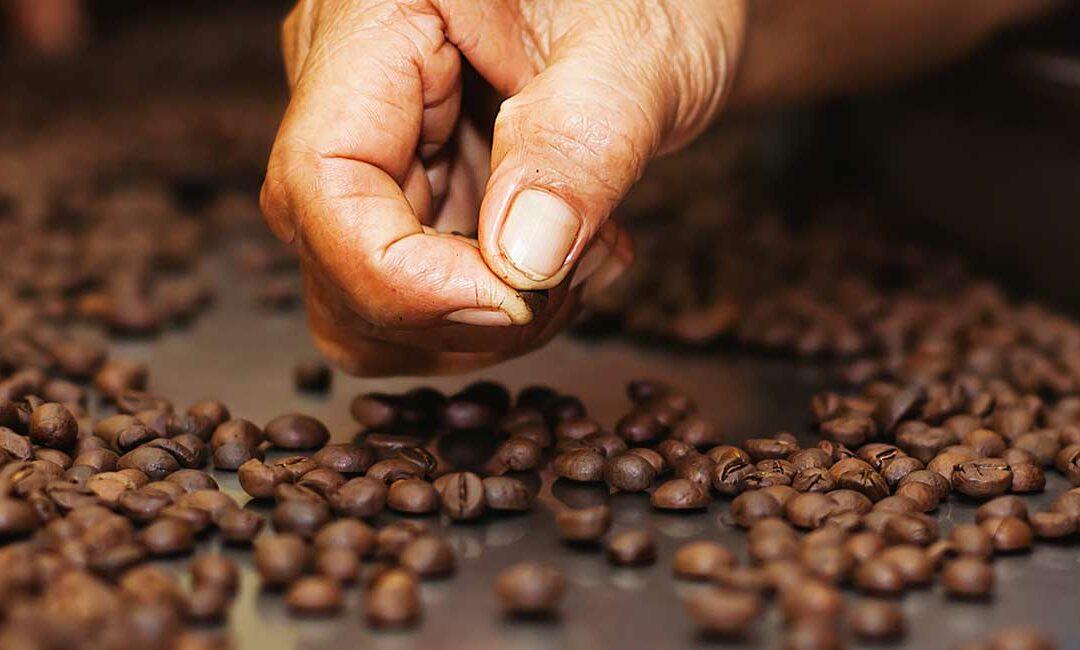 Sustainable Coffee Challenge