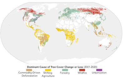Sizing Up How Agriculture Connects to Deforestation
