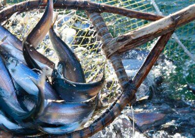 SUSTAINABLE SEAFOOD PROGRAM PRINCIPLES